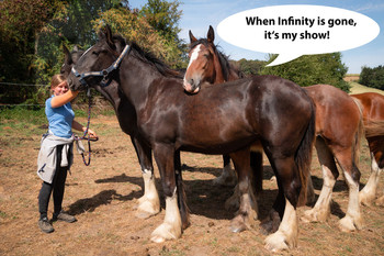 <h3>Schumanns Infinity</h3>Shire Horse stute  * 17.04.2017